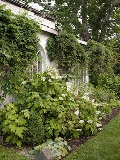 1000 Images About My Garden On Pinterest Vines