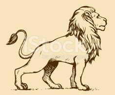 Lion. Vector drawing royalty-free stock vector art