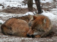 Sleeping time 4 by csandrea on @deviantART
