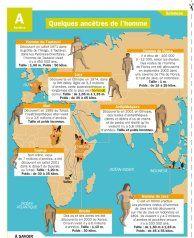 Quelques ancêtres de l'homme - Mon Quotidien, le seul site d'information pour les 10-14 ans  !