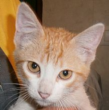 Gato Sergi. Curioso, avispado y lleno de amor. Animals, Kittens For Adoption, Foot Prints, Gatos, Animales, Animaux, Animal, Animais