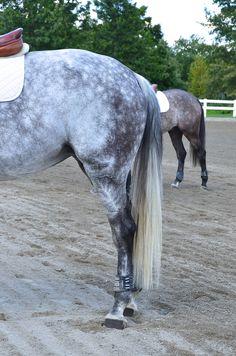 Shades of Dapple Grey
