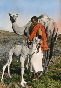 Pictures from the past: Somali camel herder. Somali Wedding, Camelus, Horn Of Africa, African Culture, People Of The World, East Africa, African Beauty, Ethiopia, World Cultures