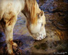 ...sed de una segunda oportunidad... ( en ADE) caballos, adopciones.....