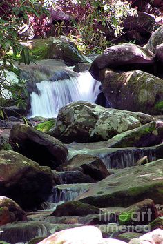 One of Thousands of Trout Streams with Waterfalls, The Greenbrier, or Middle Prong of the Little Pigeon River, near Gatlinburg  Tennessee