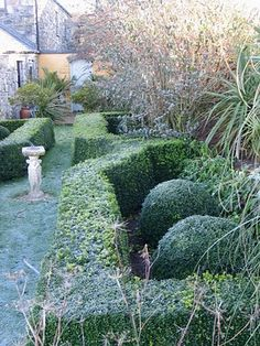 Meandering boxwood hedges around paviliion and rose garden?