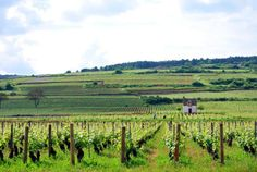Escape to France's wine country on a bike tour! Treat yourself to the best wines and greatest vistas that Burgundy has to offer when you travel with DuVine.