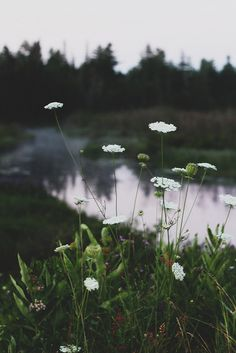 inferno-solo:  totally love queens anns lace!!  Billions and Billions | via Tumblr en We Heart It. http://weheartit.com/entry/69990742/via/k_a_r_u_n_a (❁´◡`❁) Vikings, pagan,nature, folk and other lovely things♡