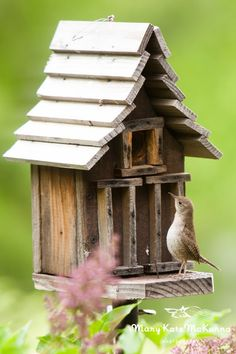 A little Wren Inspecting the birdhouse for a new living space.