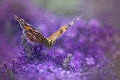 Purple Rain by Alida Jorissen on 500px