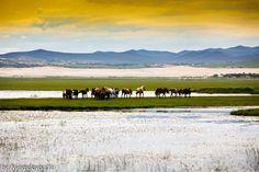 Nomads summer  Photo by B.Bayr