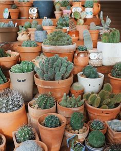 Did you know that, for cacti, use a pot just large enough to fit the plant. For other succulents, use a pot just slightly larger than the root ball. Image by @motherofcrasas #helloplantlover