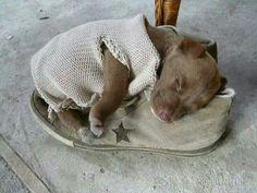 Sweet puppy....