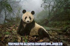 True peace for all earth's creatures soon. - Hosea 2:18.