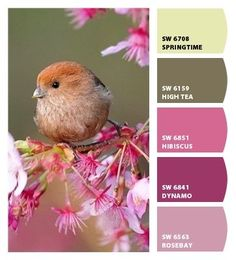 Chip It! by Sherwin-Williams – ChipCard by jan805