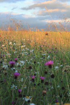 Wild flower borders | jillyspoon | Flickr