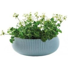 KETER COZIES L květináč, 54 x 54 x 20cm, modrá 17202258