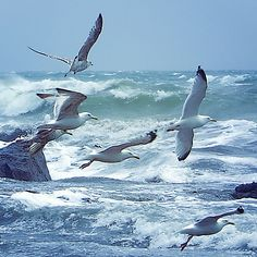 Windy day by Christian Wilt, via Flickr