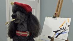 Picasso, Dali, and Pollock have nothing on this badass poodle artiste.    Polo, a 6-year-old poodle, paints works of art featured in charity auctions to raise money for other pets.  Learn more at www.badasspoodle.com