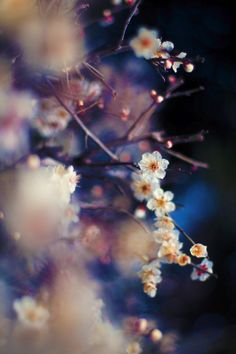 broke out glorious blossoms, but not a leave was to be seen in the whole of the…
