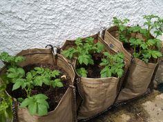 Good ideas for container gardening