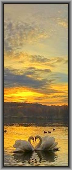 Sunrise in the valley of the three ponds #swan sunset amazing landscape  #by Tømasz Zygøń on 500px.com