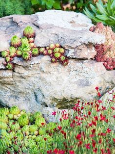 Better Home Gardens: Do It Yourself: An Attractive Rock Garden Anyone Would Be Proud Of http://betterhomegardens.blogspot.com/2013/02/do-it-yourself-attractive-rock-garden.html#