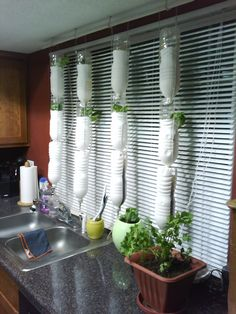 My vertical window farm
