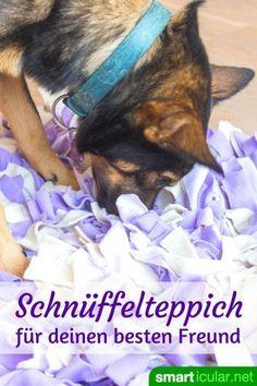 Wenn sich deine Fellnase zu Hause langweilt, dann versuch es doch mal mit einem selbstgebastelten Schnüffelteppich. Der fordert deinen Vierbeiner, macht ihn müde und zufrieden. Versuch, Loki, Diy And Crafts, Dog Cat, Puppies, Pets, Lifehacks, Paracord, Shiva
