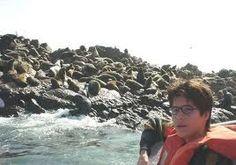 Islas Palomino - Lobos Marinos, su reino.