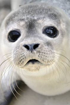 Aw so cute beautiful creatures, animals beautiful, pretty animals, majestic Cute Creatures, Beautiful Creatures, Animals Beautiful, Pretty Animals, Beautiful Eyes, Majestic Animals, Sea Creatures, Cute Baby Animals, Animals And Pets