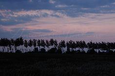 Campagne renazzesi al tramonto. Canon EOS 1200D.