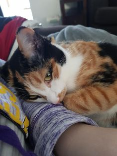 She misses me when Im gone. by DeadlyViking cats kitten catsonweb cute adorable funny sleepy animals nature kitty cutie ca