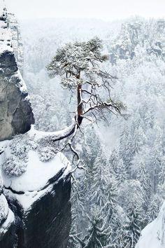 """a-sydney: """"Lone Pine by Kilian Schönberger """""""