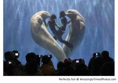 Belugas and trainers creates cool formation – A   heart of compassion is being shown.