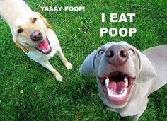 Dude is not a poop eater but this is hilarious!