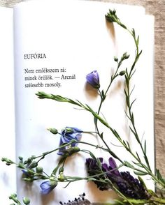 Some Good Quotes, Quotes To Live By, Best Quotes, Haiku, Literature, Poems, Thoughts, My Love, Autumn
