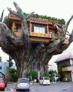 Incredible tree restaurant Naha is the capital of Okinawa Prefecture, the tropical island group south of mainland Japan Unusual Buildings, Interesting Buildings, Cool Tree Houses, Crazy Houses, Tree House Designs, Unique Trees, Old Trees, Unusual Homes, Okinawa Japan