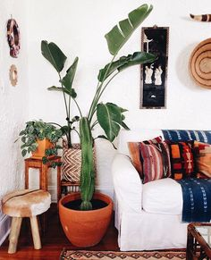 House plant Inspiration