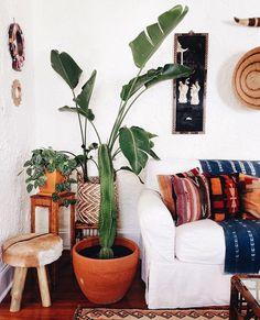 Plants. @thecoveteur