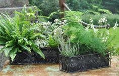 Bregner med andre grønne planter, lyng, stenurt m.m