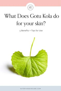 Benefits of Gotu Kola for Your Skin – Kate Ryan Skincare Skin Care Regimen, Skin Care Tips, Gotu Kola Benefits, Natural Face Pack, Centella, Sagging Skin, Health And Beauty Tips, Aging Gracefully