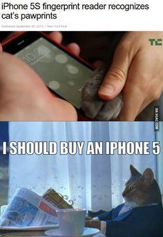 Cat deserves an iPhone 5s
