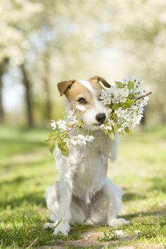 Puppy and flowers, the perfect match.