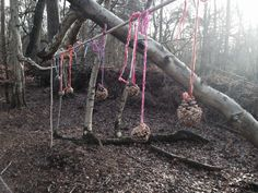 Peanut butter and seed bird feeders made at forest school