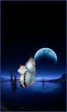Moon Images, Moon Pictures, Nature Pictures, Beautiful Pictures, Beautiful Nature Wallpaper, Beautiful Moon, Butterfly Wallpaper, Butterfly Art, Image Bleu