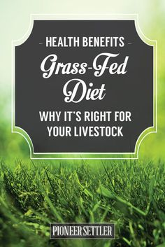 What are the benefits of grass fed beef? What does grass fed mean? Why is grass-fed better? This article explains why your livestock needs a grass-fed diet Fodder System, Types Of Farming, Farm Plans, Homestead Gardens, Survival Prepping, Homestead Survival, Grass Fed Beef, Hobby Farms, Urban Farming