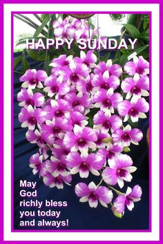 Blessed Sunday Morning, Morning Wish, Happy Sunday, Hello Sunday, Days Of Week, Morning Inspirational Quotes, Sunday Quotes, Famous Quotes, Blessings