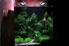 http://all4aquarium.ru/en/events/dennerle-nanocontest-2013/entries