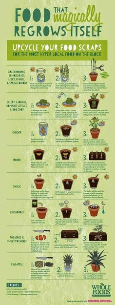 Upcycle you food scraps!